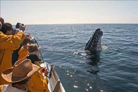 Whale watching tours Byron Bay